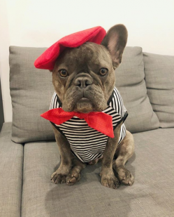 winstonthefrenchiee_.png
